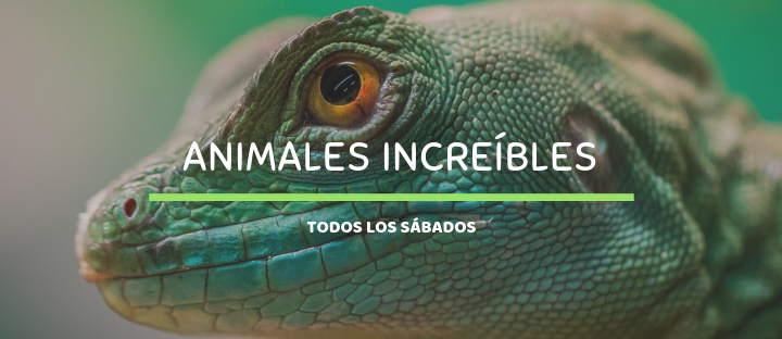 Taller: Animales Increíbles