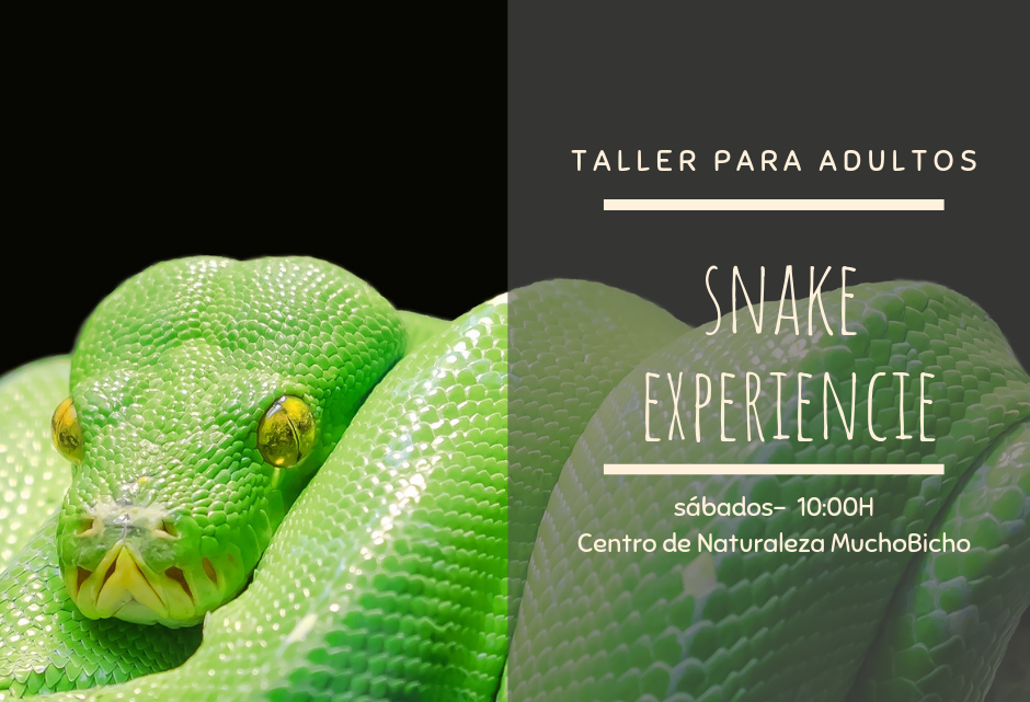 SNAKE EXPERIENCE